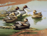Ducks Unlimited - Morning Most Tin Sign