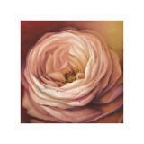 Rose Portrait Giclee Print by Lisa Audit