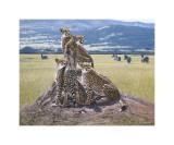 Cheetah Watch Giclee Print by John Banovich