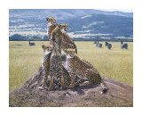 Cheetah Watch Giclee Print by John Banovich