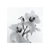 Brin d'orchidée II Reproduction procédé giclée par Tom Artin