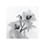Orchid Spray II Giclée-tryk af Tom Artin