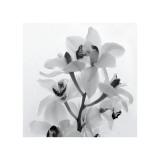Brin d'orchidée I Reproduction procédé giclée par Tom Artin