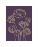 Tulip, no. 13 Giclee Print by  Botanical Series