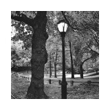 Light in Central Park Giclee Print by Erin Clark