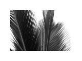 Palms, no. 15 Giclee Print by Jamie Kingham