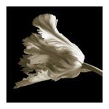 Tulip Giclée-tryk af Michael Harrison