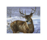 Through My Window: Whitetail Deer Giclee Print by Joni Johnson-godsy