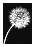 Dandelion Tilt Giclée-tryk af Jenny Kraft