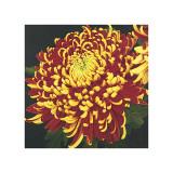 Chrysanthemum, no. 1 Giclee Print by Elizabeth Hellman