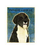 Portuguese Water Dog Giclee Print by John Golden