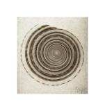 Sundial Shell Giclee Print by  Mandolfo