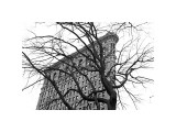 Flatiron with Tree Giclee Print by Erin Clark