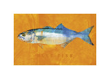 Bluefish Giclee Print by John Golden