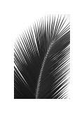 Palms, no. 14 Giclee-trykk av Jamie Kingham