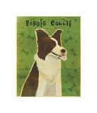 Border Collie Giclee Print by John Golden