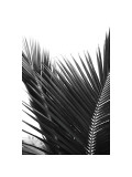 Palms, no. 12 Giclee Print by Jamie Kingham