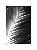 Palms, no. 6 Reproduction procédé giclée par Jamie Kingham