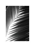 Palms, no. 6 Giclee Print by Jamie Kingham