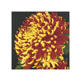 Chrysanthemum, no. 2 Giclee Print by Elizabeth Hellman