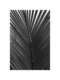 Palms, no. 9 Reproduction procédé giclée par Jamie Kingham