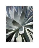Cactus I Giclee Print by Jenny Kraft