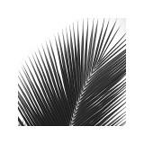 Palms 14 (detail) Lámina giclée por Jamie Kingham