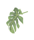 Philodendron III Reproduction proc&#233;d&#233; gicl&#233;e par Jenny Kraft
