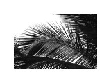 Palms, no. 13 Giclee Print by Jamie Kingham