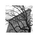 Flatiron with Tree (detail) Giclee Print by Erin Clark