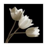 Three Tulips Giclée-tryk af Michael Harrison