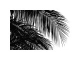 Palms 3 Giclee Print by Jamie Kingham