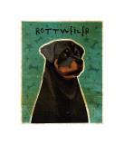 Rottweiler Giclee Print by John Golden