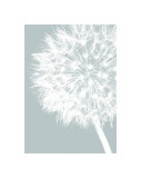 Dandelion Crop (blue) Giclee Print by Jenny Kraft