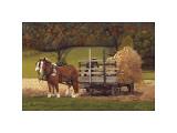 Amish Harvest Giclée-tryk af Kathleen Green