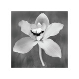 Orchid Giclee Print by Erin Clark