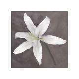 White Lily Giclee Print by Erin Clark