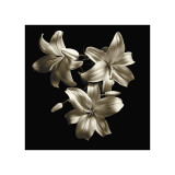 Three Lilies Giclée-tryk af Michael Harrison