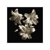 Three Lilies Giclée-Druck von Michael Harrison