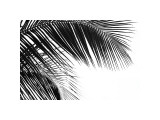 Palms, no. 11 Giclee Print by Jamie Kingham