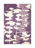 Eucalyptus, Mulberry Giclee Print by Denise Duplock