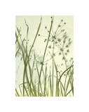 Watery Grasses II Giclee Print by Jenny Kraft