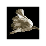 Tulip Giclee Print by Michael Harrison