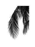 Palms, no. 5 Giclee-trykk av Jamie Kingham