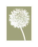 Dandelion (khaki) Giclee Print by Jenny Kraft