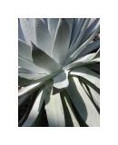 Cactus II Giclee Print by Jenny Kraft