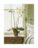 Bedside Orchid Giclee Print by Zhen-Huan Lu