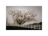 Frosted Tree and Fence Giclee Print by David Winston