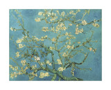 Almendro con flores, San Remy (Almond Branches in Bloom, San Remy, ca.1890) Lmina gicle por Vincent van Gogh