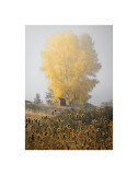 Yellow Tree and Teasel Giclee Print by David Winston